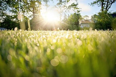 Rocío sobre la hierba, Rocío de madrugada, Mañana, naturaleza, hierba, Rocío, verano
