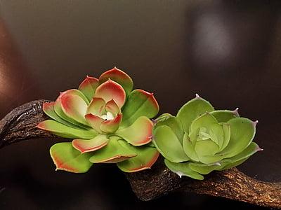 fiori, succulente, deserto, pianta, verde, Cactus, giardino
