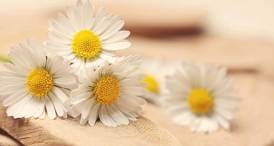 Margarida, Gràcies, romàntic, Romanç, blanc, afecte, emoció