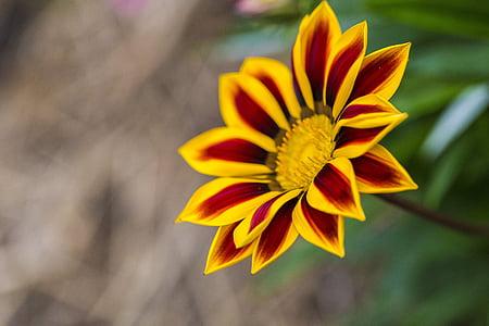 flower, closeup, nature, spring, plant, bloom, blossom