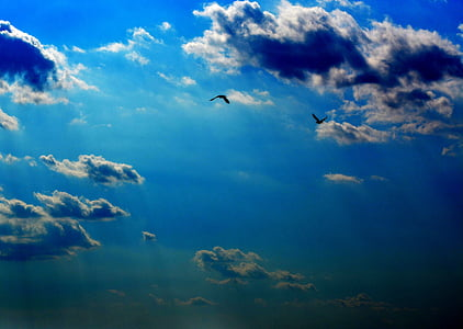 sky, cloud, twilight, birds, blue