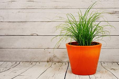lọ hoa, cỏ, thực vật, nồi Ceramic, gỗ - tài liệu, Chậu cây, không có người