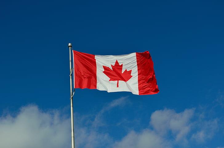 lá cờ Canada, Canada, Maple, Quốc gia, xuất nhập cảnh, người tị nạn