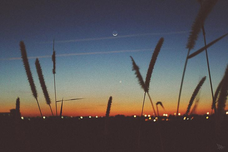 posta de sol, capvespre, Lluna, cel, silueta, plantes, paisatge