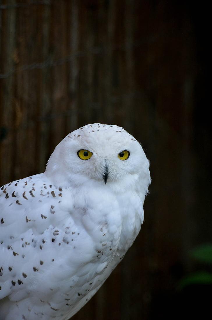 owl, zoo, portrait, bird, animal, nature, wildlife