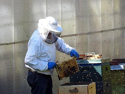 apicultor, abelles, ruscs d'abelles, apicultura, abelles de mel, insecte, rusc