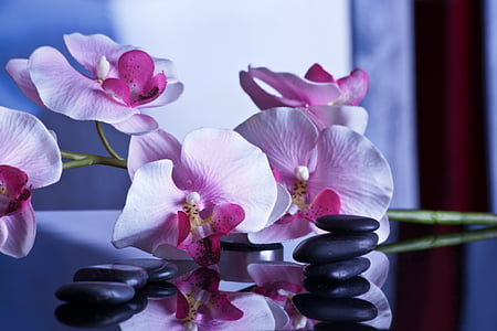 massage, afslapning, sten, Wellness, resten, Recovery, Spa