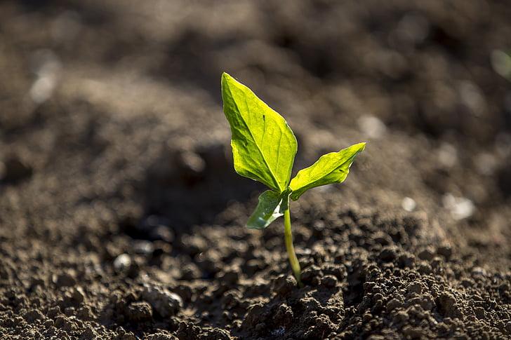 l'agricultura, terra, granja, sòl cultivat, creixement, fulla, brutícia