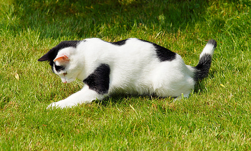 cat, young, playful, garden, out, young cat, kitten