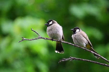 životinja fotografije, ptice, grana, makronaredbe, kolac, ptica, životinja životinje