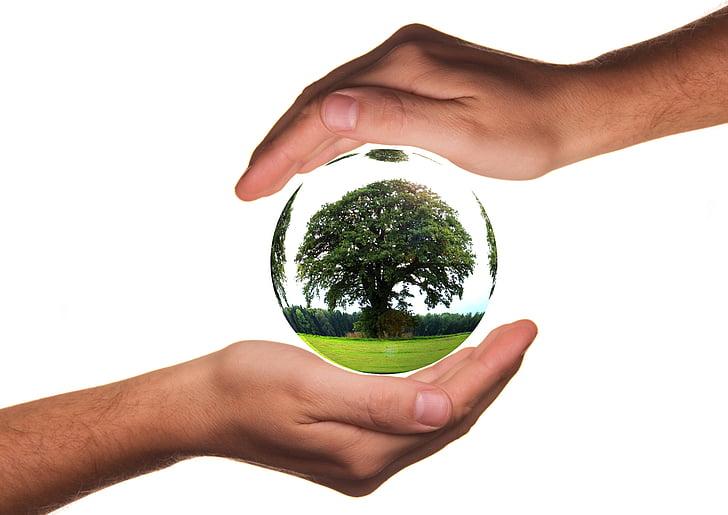 aizsargātu, rokas, ekoloģija, aizsardzība, koks, dzīvot, atbildību