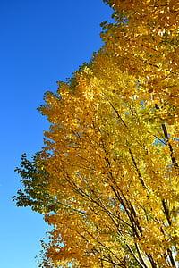tardor, fulles grogues, cel blau, el paisatge