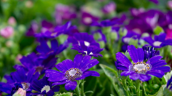 skaisti ziedi, gultas, ziedi, ķekars puķes, ziedu ķekaru, lauku ziedi, puķe, ziedu lauks