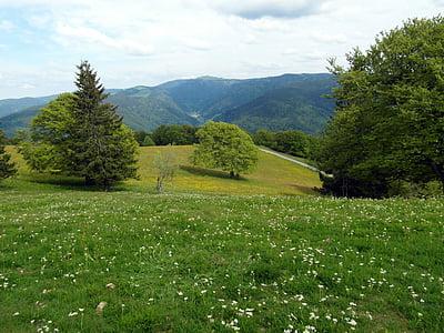 đồng cỏ Hoa, mùa hè, đồng cỏ mùa hè, Hoa, cây, Meadow, rừng đen