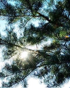 sol, raig d'esperança, llum del sol, raigs, Sunbeam, raig, llum
