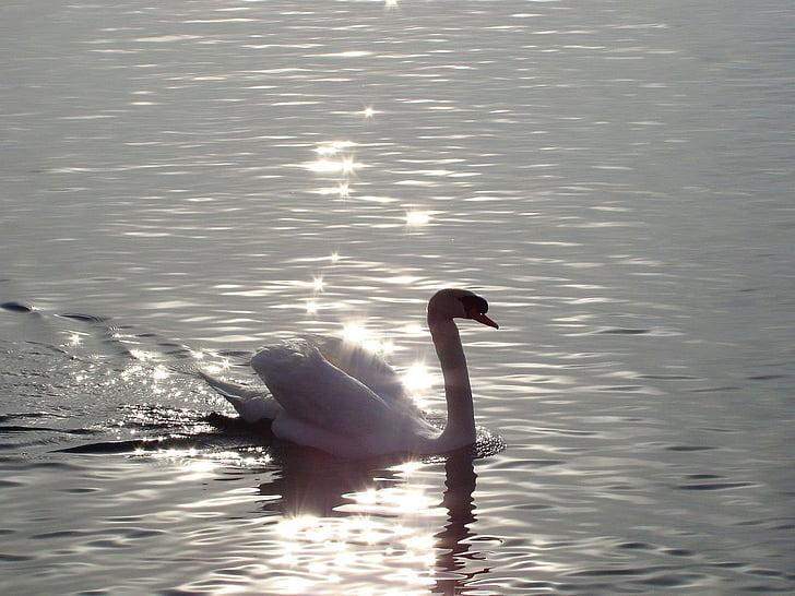 looma, lind, Luik, Lake, Sunrise, Daybreak, vee