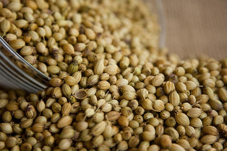 coriandre, llavors, aliments, ingredient, condiment, herba, espècies