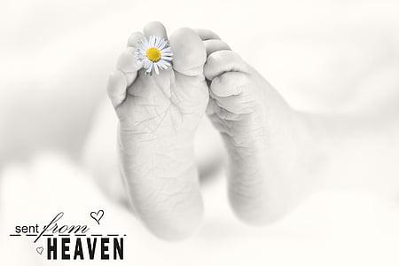 baby feet, baby, feet, reborn, baby photography, infant, human body part