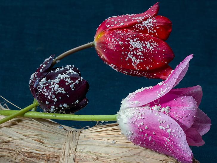 tulipaner, komposisjon, blomster, fortsatt liv, keramiske perler