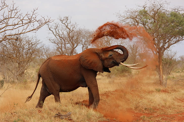 elefant, Àfrica, Kenya, Tsavo, vida silvestre, animals de Safari, natura