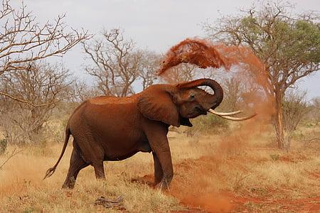 elephant, africa, kenya, tsavo, wildlife, safari Animals, nature