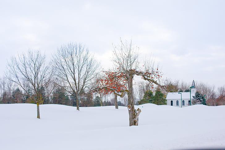 Omenapuu, talvi omenapuu, talvi, lumi, talvimaisema, lumen maisema
