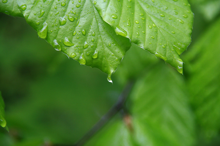 leaf, drop, nature, hope, green, water, plant