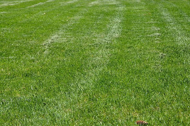 χλόη, πράσινο, γκολφ χόρτο, μπέιζμπολ χόρτο