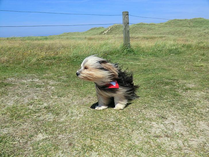 gos, vent, animal, valent, animal de companyia, l'aire lliure, l'estiu