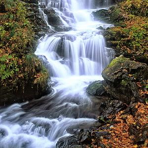 uma pequena cachoeira, folhas caídas, tarde de outono, Shirakami-sanchi, património natural, Japão, Cachoeira