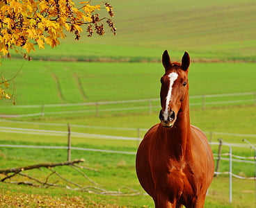 horse, animal, ride, reiterhof, brown, coupling, meadow