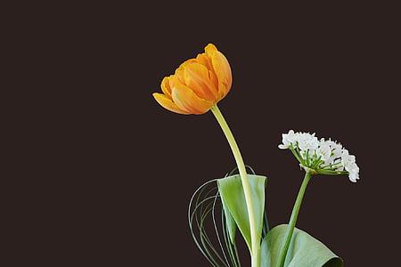 lilled, Tulip, õis, Bloom, oranž, porru lill, valge