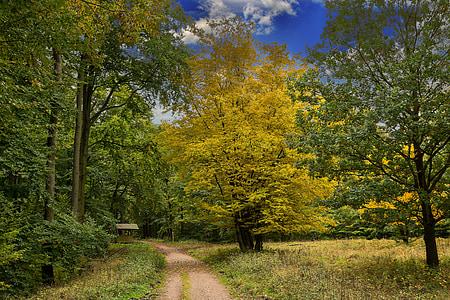 jeseni, gozd, narave, listi, pisane, Jesenski gozd, padec barve