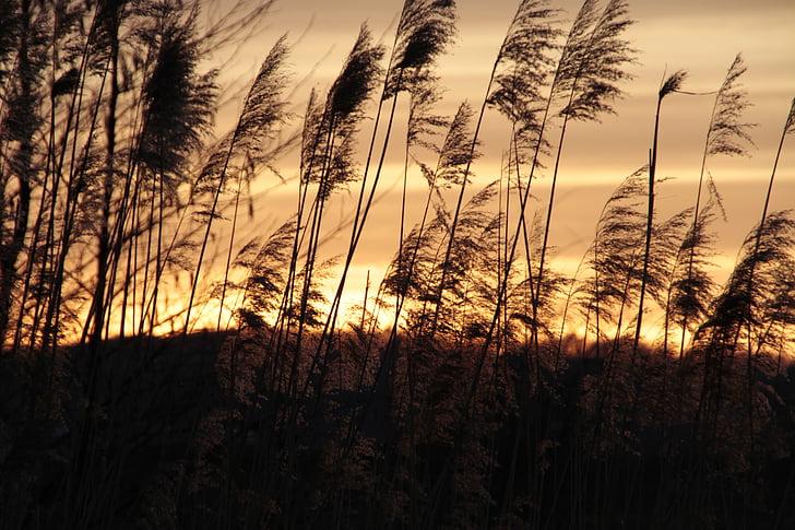 natura, posta de sol, tranquil, paisatge, cel de nit