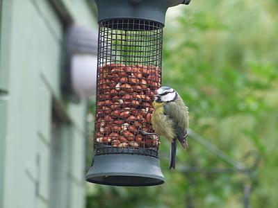 feeder, feeding birds, grain, feeding, bird