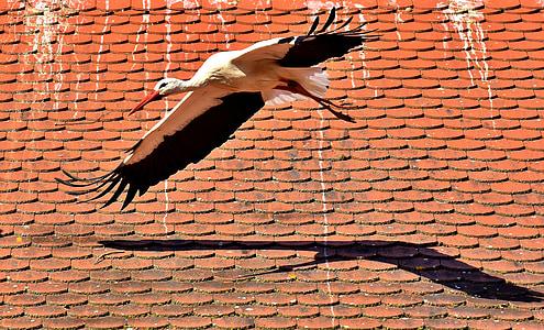 щъркел, птица, лети, перушина, природата, животински свят, крило