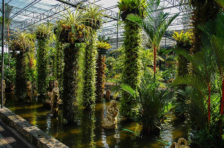 botanische tuin, plant, water