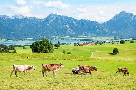 Allgäu, Ostallgäu, Bajorország, hegyek, hegység, Tegelberg, säuling