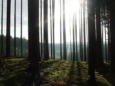 tree, back light, sun, forest, nature, mood, incidence of light