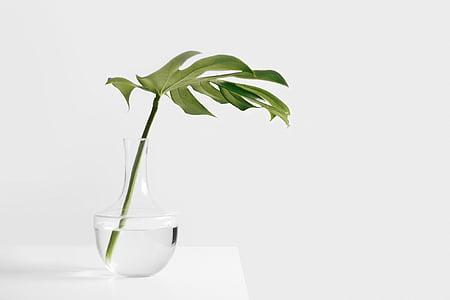 verd, fulla, planta, clar, vidre, coll d'ampolla, Gerro