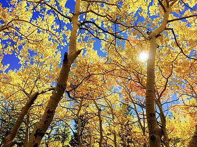 lá, mùa thu, au, mùa thu, mùa giải, cây, Thiên nhiên