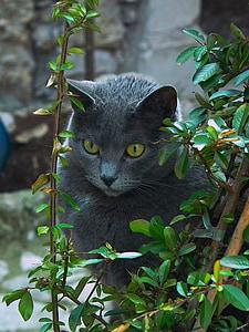 cat, animal, eyes, cat eyes
