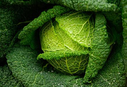 kupus, zeleno povrće, svježinu, vrt, povrća, list, priroda