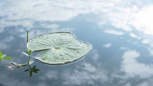 Lotus lístia, rybník, Príroda, prevrátený obraz, Yunnan, Cestovanie, sviežosť