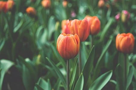 botany, desktop backgrounds, desktop, flora, floral, flower, flowers