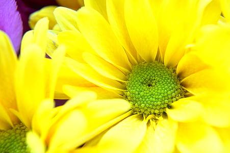 jaro, Příroda, květinové, květ, léto, závod, Bloom