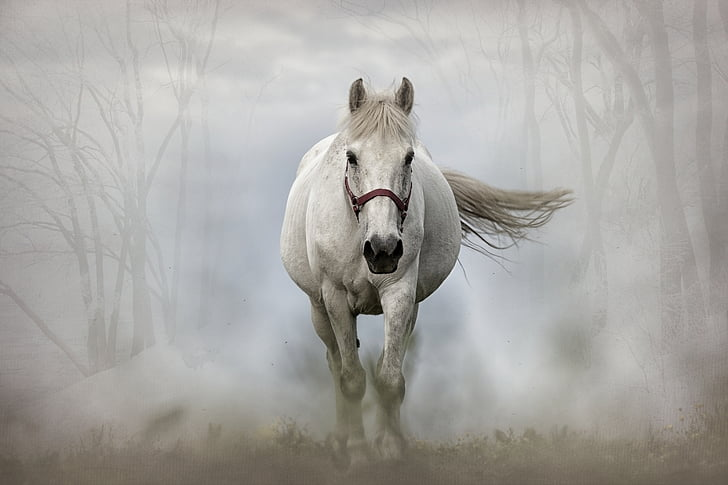 horse, mammal, white horse, animal, equine, nature, stallion
