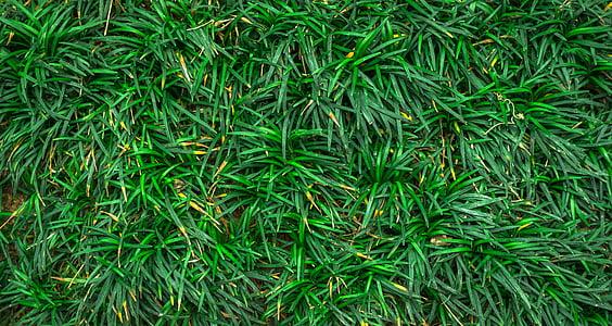 fulla, natura, verd, resum, plantes, herba, herba