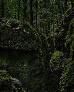 molsa, bosc, verd, bemoost, natura, salvatge, bosc de conte de fades