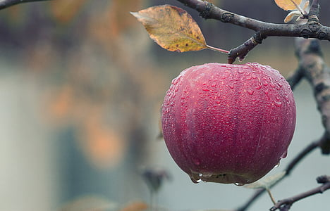 jabuka, jesen, sočan, hrana, jesen, voće, Crveni